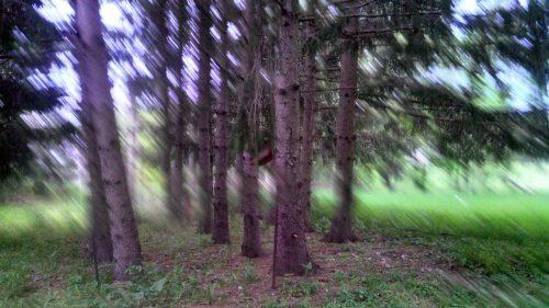 Weekly Photo Challenge – Time is Fleeting